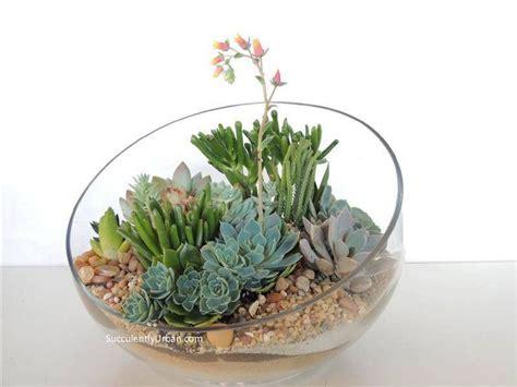Succulent Centerpieces Terrarium Pinterest Succulent Plant Centerpiece