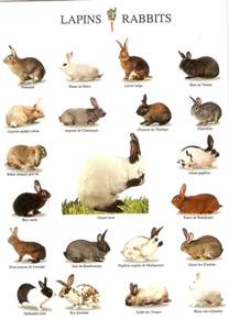 rabbit colors a chart of some rabbit breeds pinteres