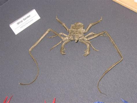 Origami Spiders - diagram origami spider 171 embroidery origami