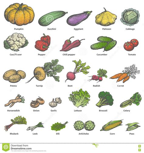 a to z vegetables names with pictures white vegetables names www pixshark images