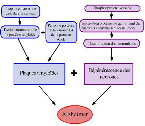 D Bilan Alzheimer