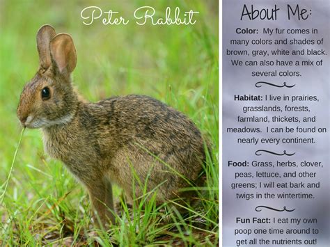 7 Facts On Bunny Rabbits by Rabbit Rabbit Facts Activities Books Photos