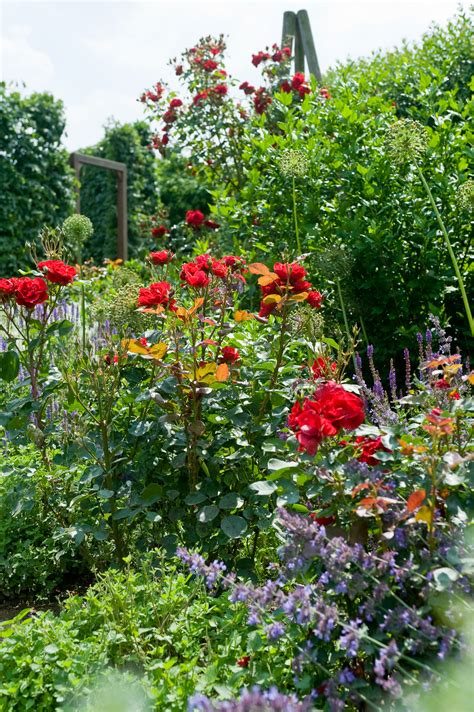 Bilder Im Garten 1535 by Bl 252 Hende F 252 R Garten Und Terrasse Das Gr 252 Ne