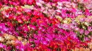 botanical gardens toowoomba carnival of flowers toowoomba abc news australian