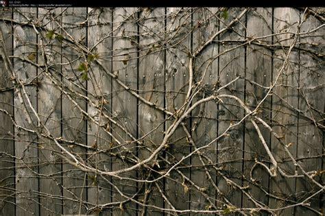 ss 0191 wall vines by stocking stuffer on deviantart
