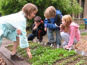 School Community Gardens   Windham County Farm to School
