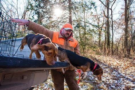 how to a to fetch birds beagle hunt owners tips and useful advices