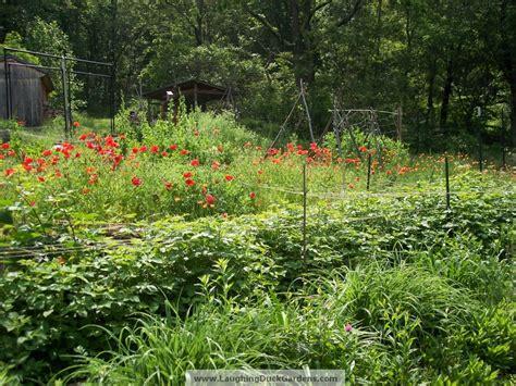 backyard grow rappahannock cook kitchen gardener 187 how does your garden grow