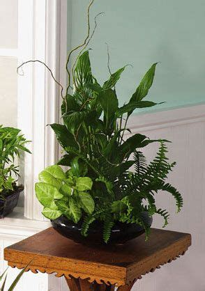 house plant tropical   color  ceramic pot nice