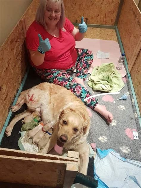 green puppy golden retriever gives birth to beautifully green puppy sick chirpse