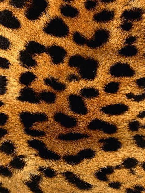 wallpaper iphone 5 leopard leopard skin pattern background ipad wallpaper 1024x1024