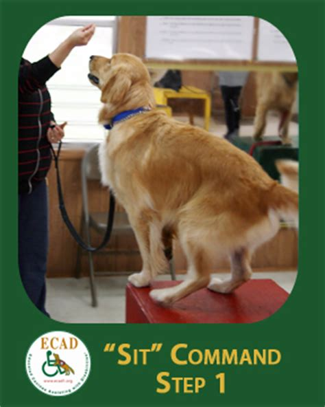 how to your to sit and stay how to teach your to stay and sit petcarerx