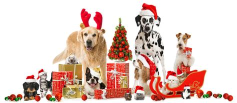 christmas pets stock photo image  dogs pets merry