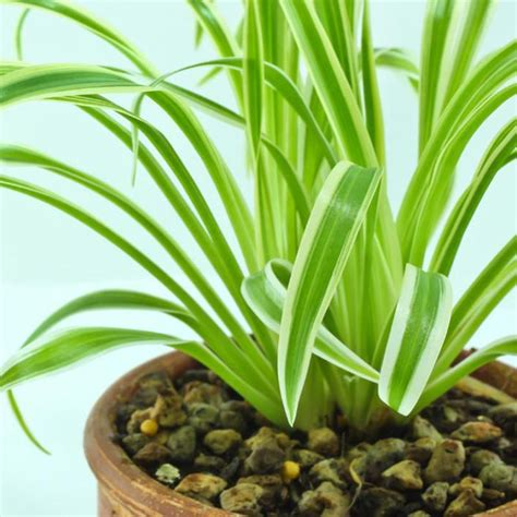 indoor plants indirect sunlight reduce air pollution with indoor plants