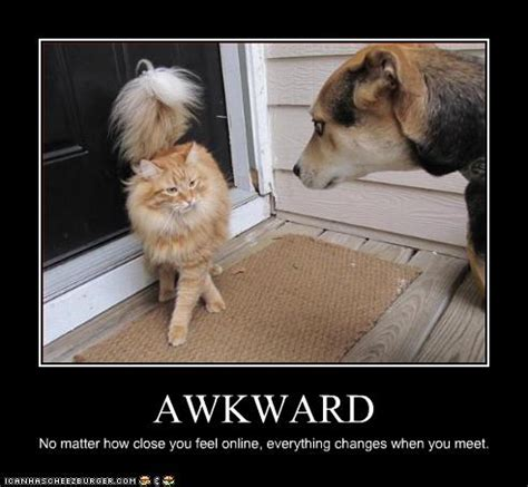 Awkward Cat Meme - new york knicks fan page forums view topic picture of