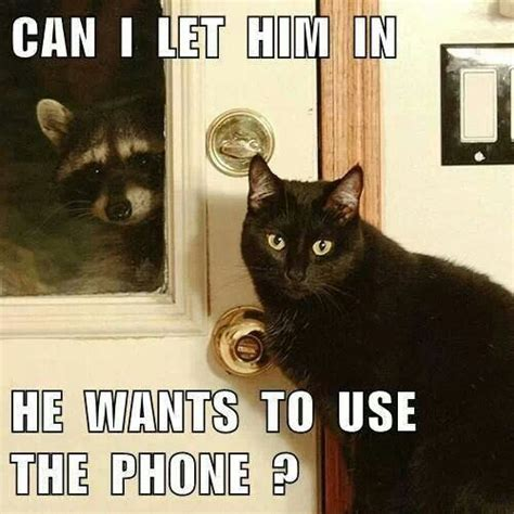 Funny Phone Memes - 1071 best images about memes on pinterest the internet