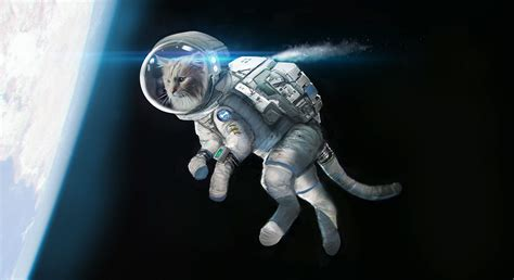 film up com say hello spaceman o2 be more dog space cat 2014