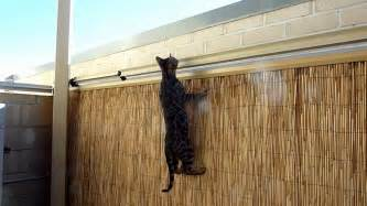 Fences For Dogs Backyard Bengal Kitten Vs Oscillot Cat Containment System Youtube