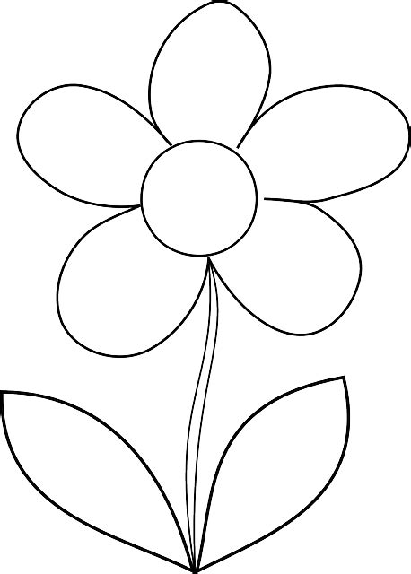 Flower Daisy Spring · Free vector graphic on Pixabay