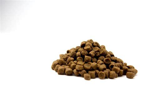 premium puppy food advance ultra premium food 10 178 racing