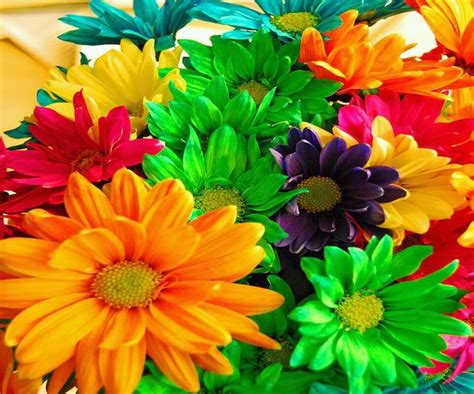 colorful flowers picture orange flowers in bloom light 17 best images about amazing rainbow items on