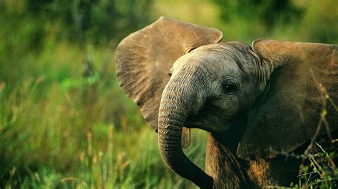 beautiful  cute animal wallpapers