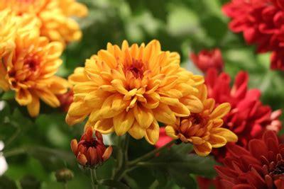 welche blumen blühen im september welche blumen balkonpflanzen kann im september pflanzen