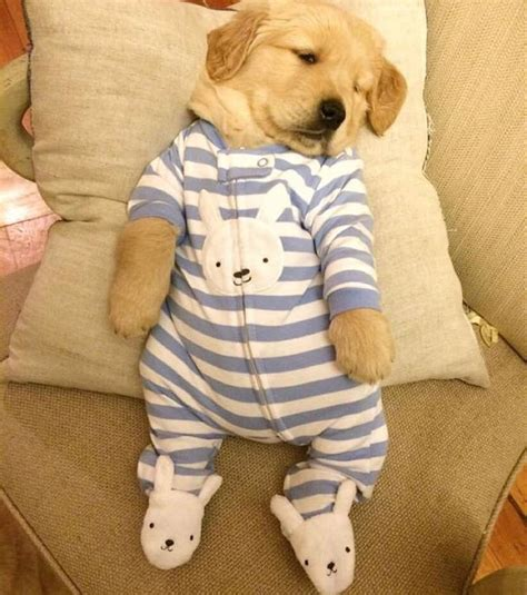 puppies in baby clothes best 25 puppy clothes ideas on pet clothes and coats