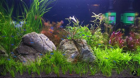 aquascape aquarium supplies aquascape aquarium supplies 28 images how to make
