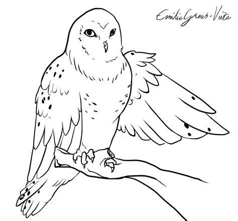 snowy owl face coloring pages
