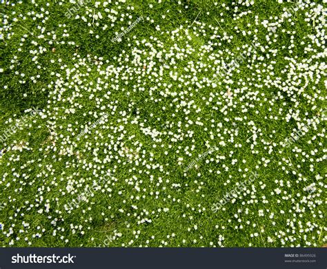 Flowery Top many white small flowers top view stock photo 86495926