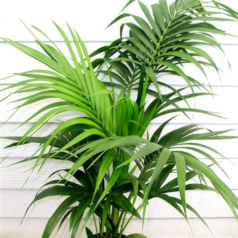 office plant office indoor plants maintenance provided in hire costs