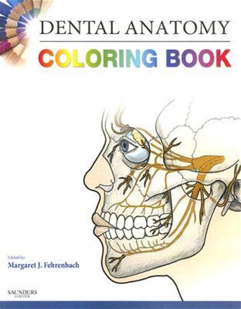 Dental Anatomy Coloring Book By Margaret J Fehrenbach
