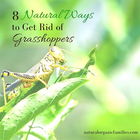 best 25 garden pests ideas on pinterest insect repellent plants companion planting and