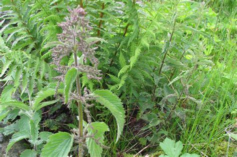 ricanti in vaso immagini di piante le erbe prato