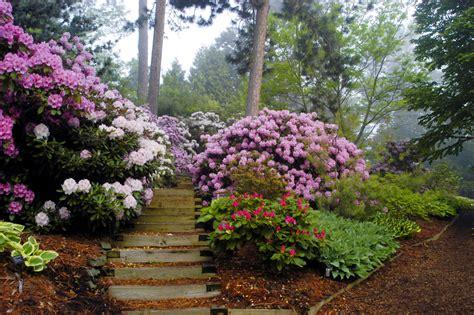 planting rhododendrons lynns nursery