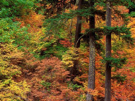 hutan alami fauna  flora