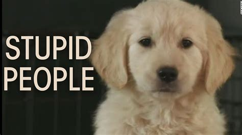 go commercial puppy godaddy bowl 2015 puppy ad go xlix puppy commercial ad stupid