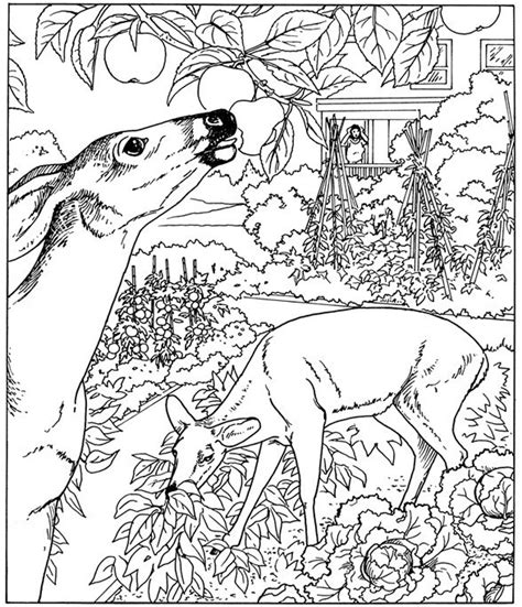 Free Coloring Pages For Adults Nature | free printable nature coloring pages for kids best