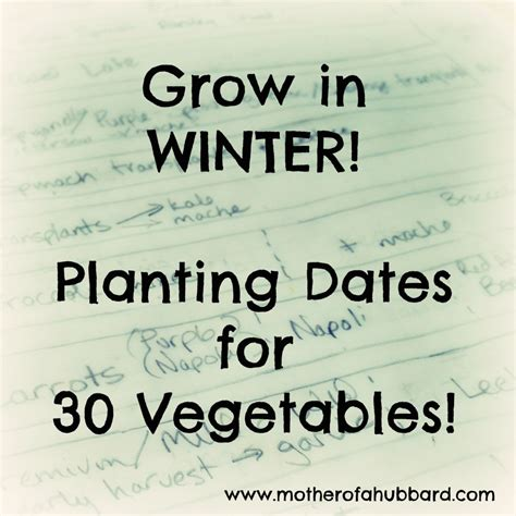 vegetables that grow in winter winter vegetable planting guide