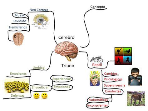 imagenes mapa mental del cuerpo humano sesi 211 n 6 de proyecto i comunicadores ubevistas una forma