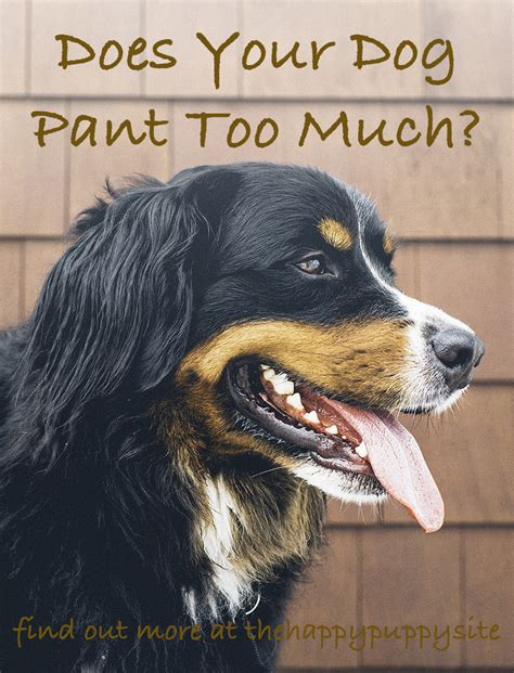 puppy panting in sleep why do dogs pant a complete guide to panting