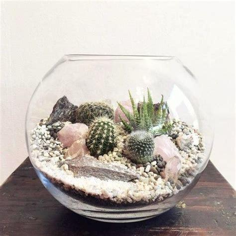 cactus terrariums easy   eye  sooo hard  manage