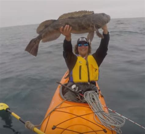 Sweepstakes Fish Table - video monster lingcod caught in kayak outdoorhub