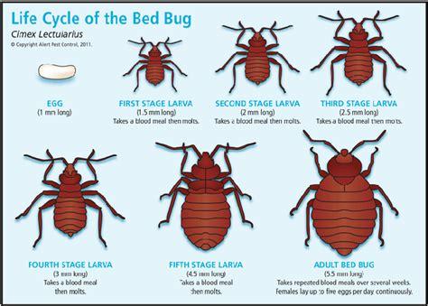bug cycle diagram alert pest