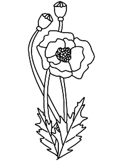 coloring page of a poppy flower coloring pages poppy flower az coloring pages
