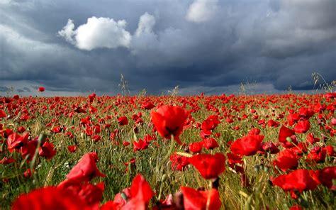 imagenes bellas hd espectaculares imagenes bellas de flores de co