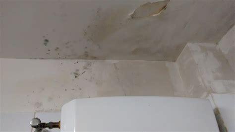 come togliere la muffa dal soffitto soffitto bagno con muffa ispirazione interior design