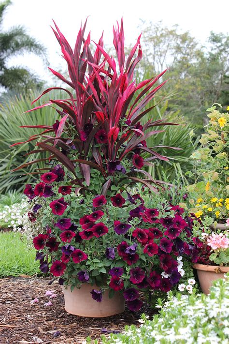 Planter Ideas Sun by Flower Pot Ideas For Sun Www Pixshark Images