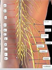 nerves: general pictures flashcards | quizlet